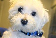 Pulse Pets / by Long Island Pulse Magazine