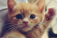 I'm not a cat person / ... But these guys are bloody cute.