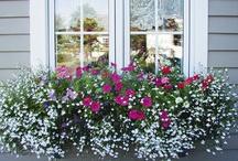 Window Flower Boxes / Want to add beautiful flowers and bright colors to help your windows stand out? Follow us for tips on how to create unique flower boxes for your windows.