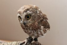 Tiny Owls / Pictures of tiny owls...just because they make me smile.