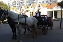 Fortuna szekerén okosan ülj / A szlovák nemzeti felkelés hetvenedik évfordulóját Dunaszerdahelyen ünnepeltük.