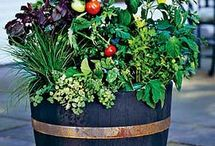 Gardening with Containers / by Pam Layne-Harris