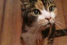 猫ฅ^•ω•^ฅ