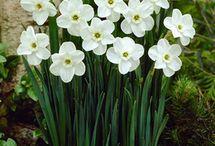 kytičky, které miluju... / kvetoucí i nekvetoucí nádhery...