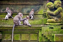 primates / by Colleen Garland