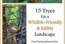 Wildlife Care Ideas