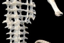 Animal skelet