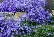 ihania kukkia