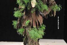 Dress plants
