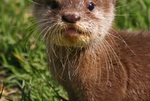 Otters are so cute!