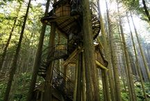 Tree Houses / by Kimberly Sabatini