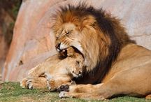 Furry Frenz / #animals #cats #dogs #pets #birds #furryfrenz