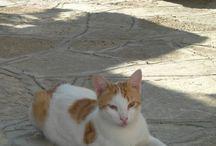 Samos Katzen