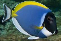 peces increibles