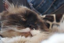 Borys Kudłaty / Kot