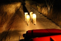 Night Encounter