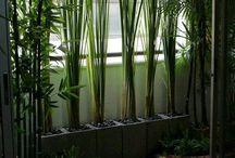 Mi jardin de invierno