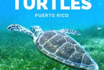 PUERTO RICO / Blog posts, tips and travel inspiration for Puerto Rico