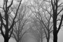 Fog / Foggy / Mist