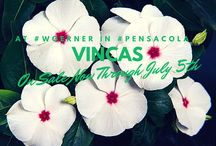 Woerner Plant Sale / Pick up beautiful flowers & plants now through July 5th during our Woerner Plant Sale here at Woerner Landscape in Pensacola!