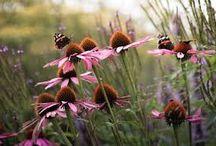 Luxe, grote tuin / Grote tuin, landelijk, ruim, floraal