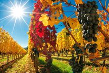 Wineries - USA / Beautiful sights of vineyards from all over the USA. From Napa Valley to the Hudson River Valley and many more breathtaking locations!