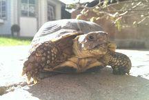 My Turtles <3