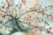 Primavera B/C
