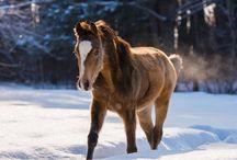 #foals