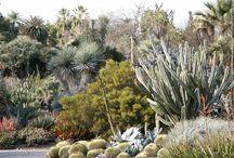 Succulent / Desert Garden