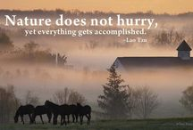 Inspiring Chinese Quotes