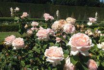 Лето/цветы/Солнце