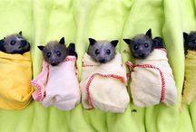 Animals - Bats / by Jan Vafa