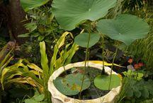 Jardins d'eau