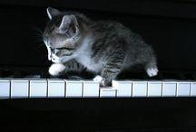 music cats / #catcontent