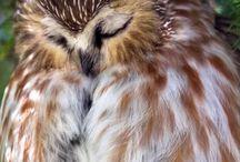 Búhos/Owls