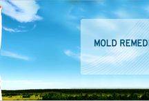 Miami Mold Testing / by Naomi