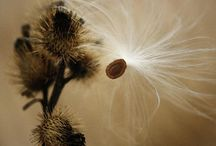 Flowers and Seeds / Flores, semillas
