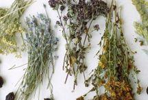 zioła i natura