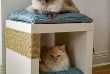 Kattsaker
