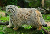 cats stuff & wild cats