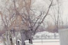 Nature's Beauty via Photography-Snow