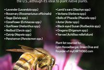 Bee Education / Bee   Learn   Education   Honey   Hive   Pollen   Science   Honeybees