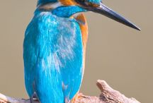 Feathered beauty / Birds