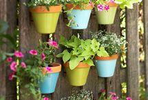 Giardinaggio composizioni fiori