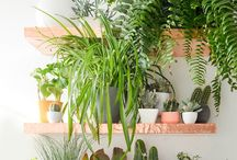 Shelve+plants Decoration