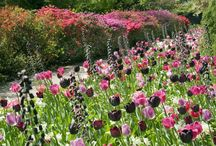 Garden - Tulips&Bulbs