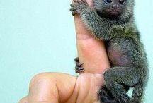 exotic n cute Animal