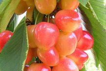 meyve veren ağaç taslanmaz hizmet verilir