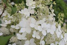 Proctor Forest & Gardens: Flower, Plant & Tree Wishlist